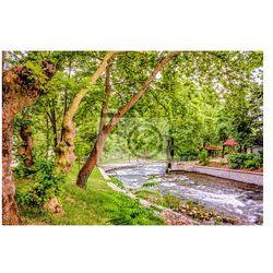 Fototapeta Pod drzewami w parku, w pobliżu rzeki