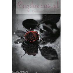 Czerwona Gotycka Róża - plakat