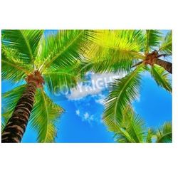 Fototapeta palm trees on blue sky and white clouds on cozumel in mexico, perspective looking up