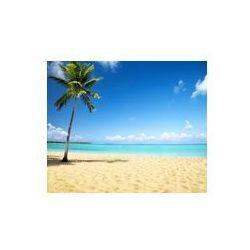 Foto naklejka samoprzylepna 100 x 100 cm - Morze i palmy kokosowe