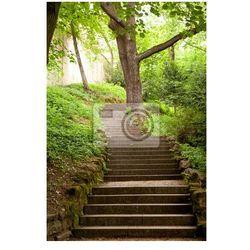 Fototapeta schody w parku