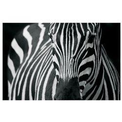 Zebra 2 - fototapeta