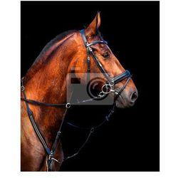 Fototapeta portret w profilu Holstein zatoki konia na czarnym tle