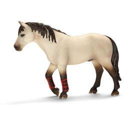Schleich Koń treningowy