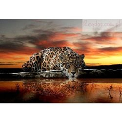 Fototapeta JAGUAR Tygrys