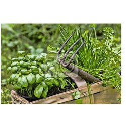 Naklejka Gartenkräuter, zioła