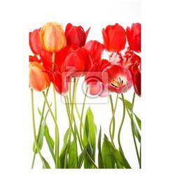 Fototapeta piękne wiosenne kwiaty .