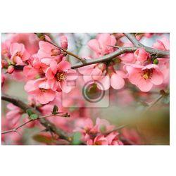 Fototapeta Kwiaty wiosenne