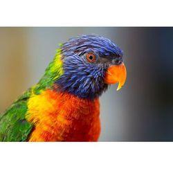 Fototapeta papuga 492
