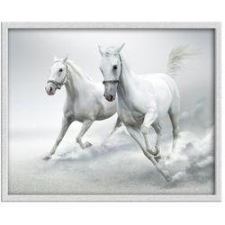 Obraz Konie 53 X 43 Cm Knor