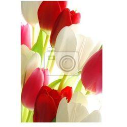 Fototapeta czerwone i białe tulipany