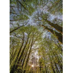 Fototapeta KOMAR 4-522 Canopy National Geographic