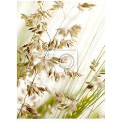 Plakat Trawy