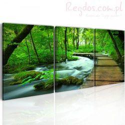 Obraz - Leśny deptak - tryptyk