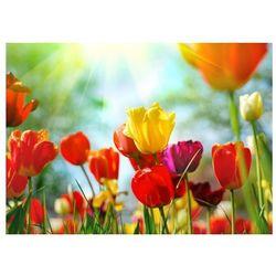 Wiosenne kwiaty - fototapeta