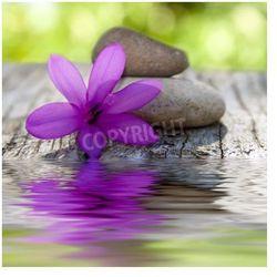 Fototapeta Naturalny kwiat z kamieni i wody