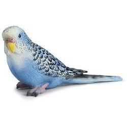 Papuga Błękitna