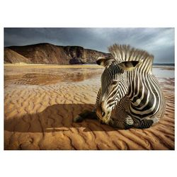 Zebra na plaży - fototapeta