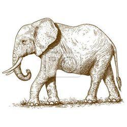 Fototapeta ilustracji wektorowych grawerowania słonia