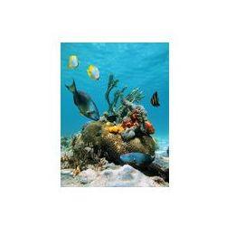 Foto naklejka samoprzylepna 100 x 100 cm - Powierzchni wody i morskiego życia